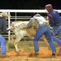 Rowdy Seward, Mickey Gee and Chris Littlefield wrestle a steer roped by teammate Jeff Hilton in the double mugging. The four men, riding for the Gee Ranch, won the Paul T. Memorial Ranch Rodeo held Oct. 6 at the Henrietta Cowboy Church Arena. (Photo courtesy Dee Ann Littlefield)