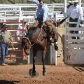 A photo by Kalico Burkes of Hurnville of her brother, saddle bronc rider Skee Burkes, was one of the three highest scoring photos entered by Clay County 4-H members in the District 3 Photography Show.