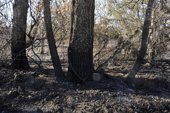 Heavy timber and brush hampered access to a grass fire that burned 100 to 150 acres near Joy Tuesday night and Wednesday.