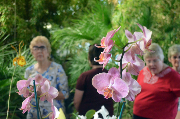 During the Hello Neighbor tour of Clay County Precinct 1, Andy Harding of Byers put on display his collection of orchids. Participants also visited River Bluff Lodge and inspected rain water collection systems at the home of Chris and Dee Ann Littlefield.