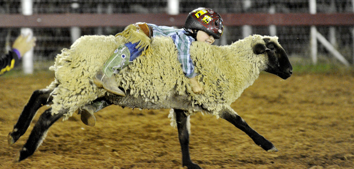 Skee Burkes claims ranch bronc title, mutton busters win the crowd