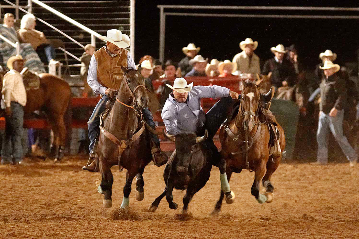 Dennis Gee hazes for son Mickey in the 2011 Pioneer Reunion steer wrestling competition. Dennis and Mickey Gee are from Dean. (Photo by Russell Orrell)